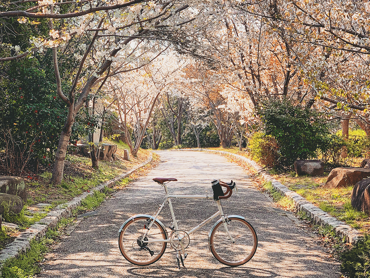 平磯緑地の桜のトンネルに自転車を置いて撮影した写真
