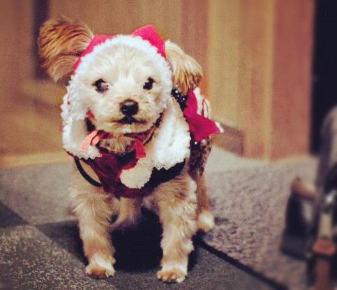 サンタ帽をかぶった犬の写真