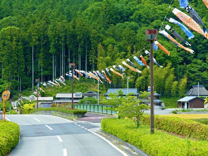 「グリーンエコー笠形」に続く道路に沿って、たくさんの「鯉のぼり」が道しるべとして吊るされている風景。