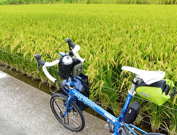 黄金色に実った稲穂が広がる田んぼの風景、その横にバイクフライデーの青い折り畳みミニベロ「ニューワールドツーリスト」が停められている写真。