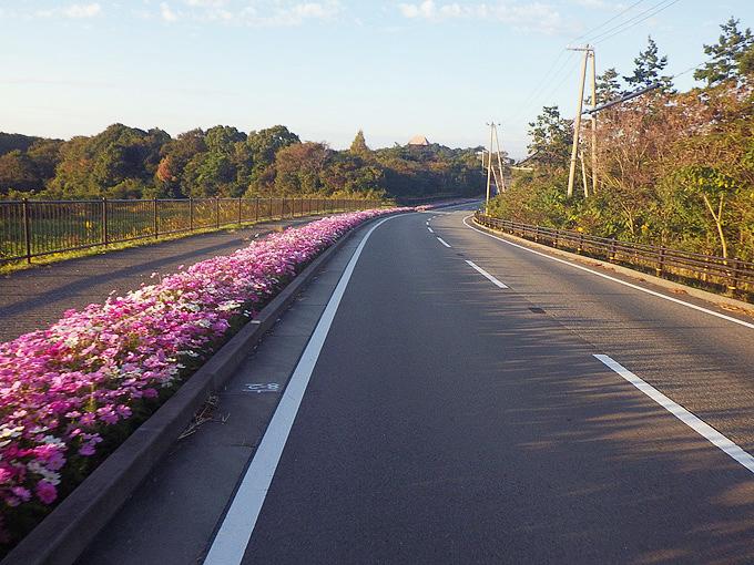 下り坂の写真。道路脇にはコスモスの花が咲いている。