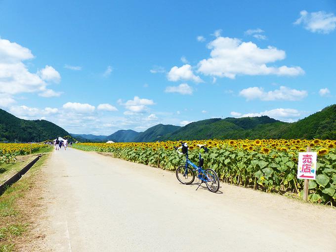 ひまわり畑の中の小道に、青い自転車「ニューワールドツーリスト」が停められている。