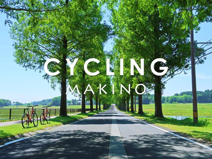 滋賀県マキノのメタセコイア並木道に2台の赤い自転車が置かれている写真