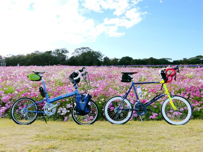 たくさんのコスモスの花の前に2台の自転車、バイクフライデーの折り畳みミニベロ「ニューワールドツーリスト」とミニベロロード「コメットR」が停められている写真。