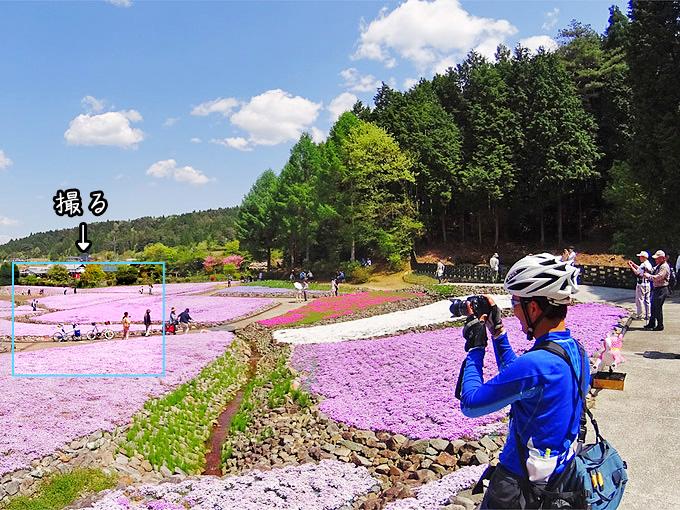 三田の観光花畑「花のじゅうたん」の風景。芝桜の花が満開で、花畑の中をたくさんの人が歩いている。花畑の中に2台の自転車、ニューワールドツーリストとコメットRが停められている。