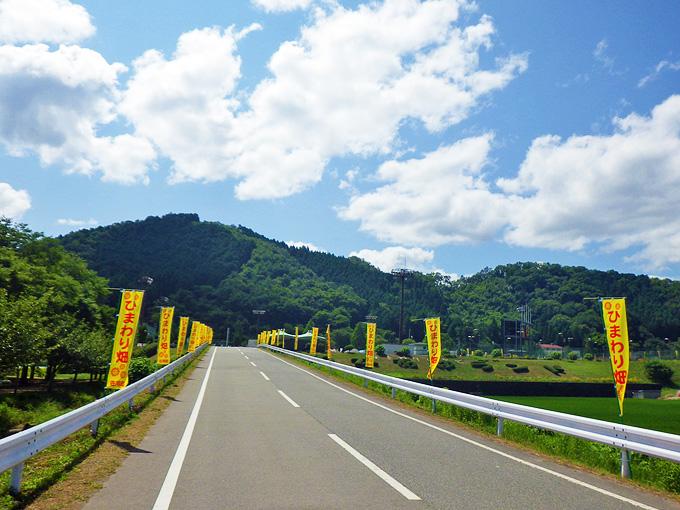 真っ直ぐな道路。道路脇には「ひまわり畑」と書かれた黄色い「のぼり」がたくさん立てられている。