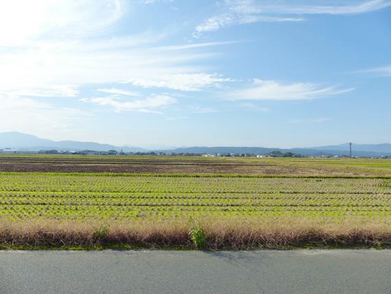 滋賀県高島市の広大な田園風景。収穫を終えた後の田んぼがずっと先まで広がっている。