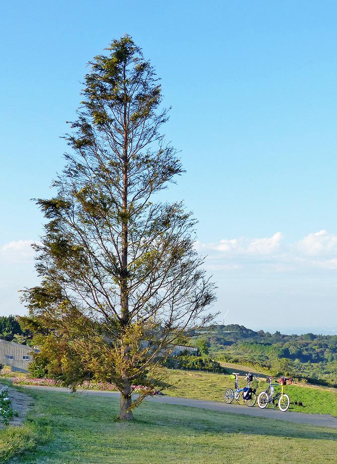 大きな木の下に2台の自転車、バイクフライデーの折り畳みミニベロ「ニューワールドツーリスト」とミニベロロード「コメットR」が停められている写真。