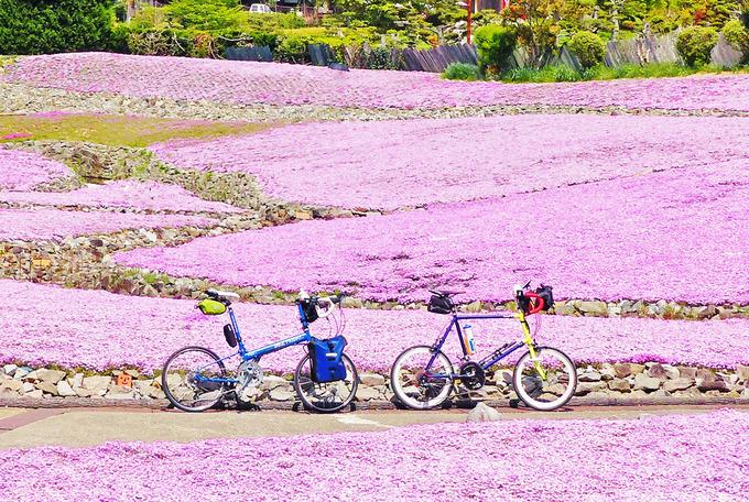 兵庫県・三田にある観光庭園「花のじゅうたん」にピンク色の芝桜の花が咲く風景。花畑の中に2台の自転車が停められている写真。