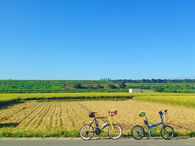 兵庫県加古郡稲美町の田園風景。青空の下に広がる田んぼは、金色の稲穂があるところと、すでに刈り取られたところがある。田んぼの前に2台の自転車、バイクフライデーの折り畳みミニベロ「ニューワールドツーリスト」とフジのミニベロロード「コメットR」が停められている写真。