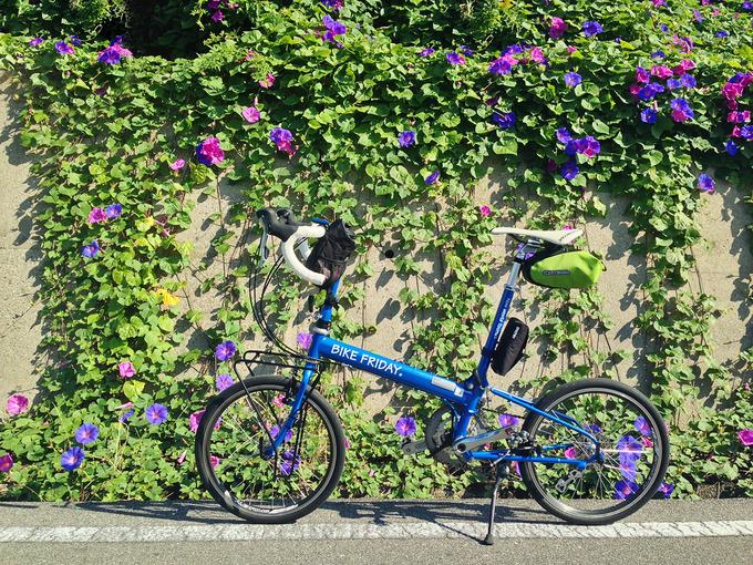 斜面から垂れ下がる朝顔の葉と花を背景に、バイクフライデーの折り畳みミニベロ「ニューワールドツーリスト」を横から写した写真。