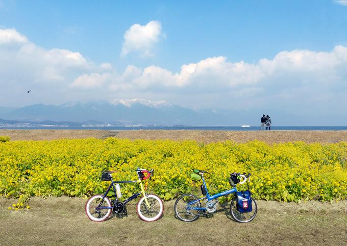滋賀県守山市の第一なぎさ公園に、早咲きの菜の花「カンザキハナナ」が咲いていて、遠くには冠雪した比良山系の山々が見える。景色は鮮やかな黄色と水色に染まっている。手前には2台の自転車、「ニューワールドツーリスト」と「コメットR」が停められている。