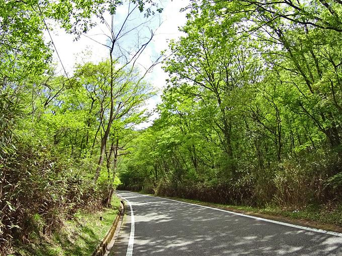 鮮やかな新緑の木々が立ち並ぶ山道の写真。道路には木漏れ日と影が散らばっている。