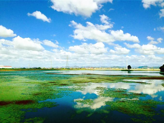 兵庫県加古郡稲美町にある「天満大池」の写真。水面にはところどころ緑色の水草が広がり、それ以外の場所は青空と白い雲を鏡のように映し出している。