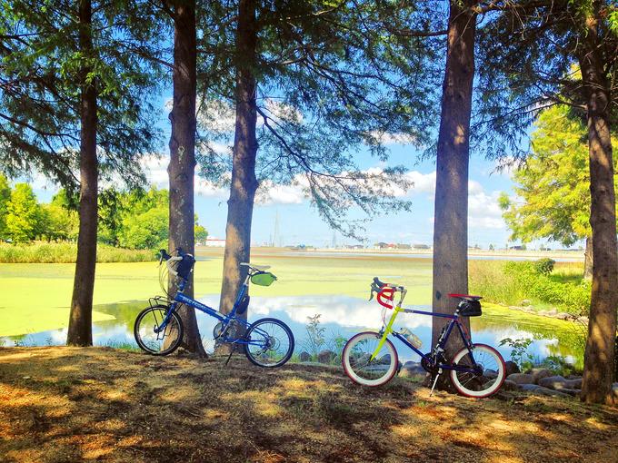兵庫県加古郡稲美町の「天満大池公園」の木立の中に2台の自転車、バイクフライデーの折り畳みミニベロ「New World Tourist」とフジのミニベロロード「コメットR」が停められている写真。木々の間からは、むこうに天満大池の青い水面と青空、水面に生い茂る緑色の藻など、色鮮やかな自然の風景が見える。