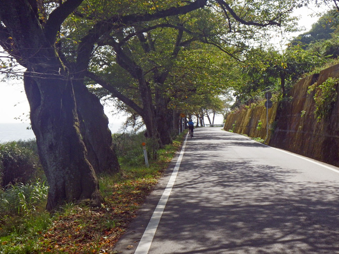 琵琶湖の北端部の「海津大崎」の風景。湖岸沿いに桜の木が立ち並んでいる。