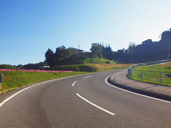 右にカーブした急な上り坂の写真。道路脇にはピンク色のコスモスの花が咲いている。