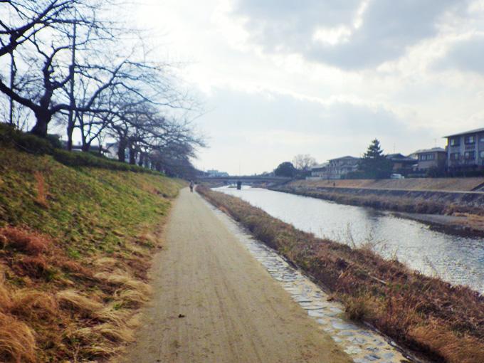 高野川の河川敷の遊歩道の風景。右手に川面、左手に草が生えた土手と、その上に枝ばかりの桜並木が見える。