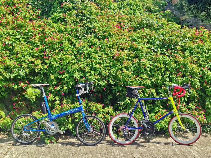 播磨サイクリングロードの道沿いに伸びた緑色の葉と、その中にピンク色の花がある風景。花と緑の前に、2台の自転車、バイクフライデーの折り畳みミニベロ「ニューワールドツーリスト」とフジのミニベロロード「コメットR」が停められている。