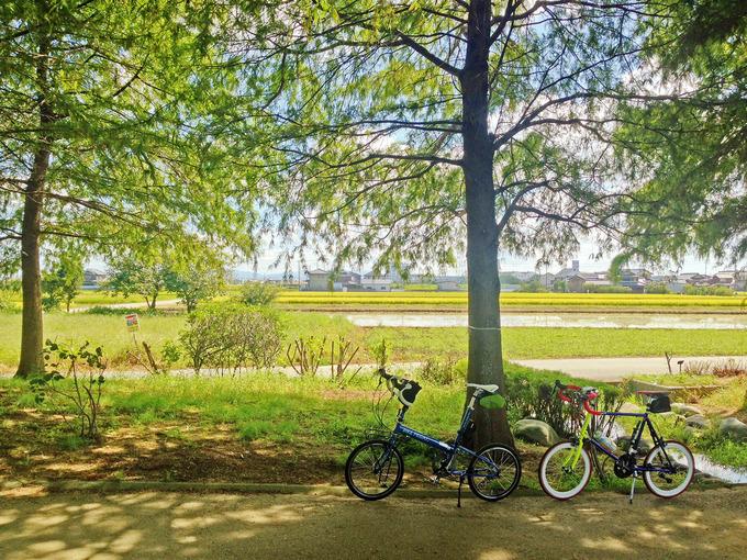 兵庫県加古郡稲美町の「天満大池公園」内の写真。立ち並ぶ木々の木陰に2台の自転車、バイクフライデーの折り畳みミニベロ「ニューワールドツーリスト」とフジのミニベロロード「コメットR」が停められている。むこうには金色の田んぼの風景が見える。