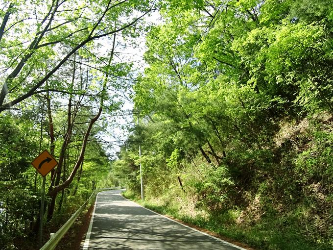 青野ダム・千丈寺湖の周辺の道路の写真。緑色の木々が道路を囲むようにして、緑のトンネルを形作っている。
