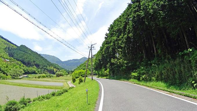 田舎道の写真。右側は森に、左側は田んぼになっている。