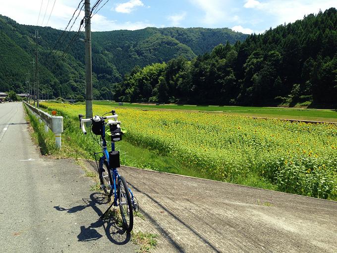 真っ直ぐな道路の脇にバイクフライデーの折り畳みミニベロ「ニューワールドツーリスト」が停められている。道路の右側には小規模なひまわり畑が広がっている。