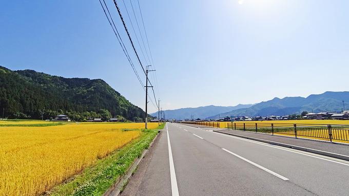 田舎道の風景。道路の両側に麦畑が広がっている。金色の野原のような風景である。