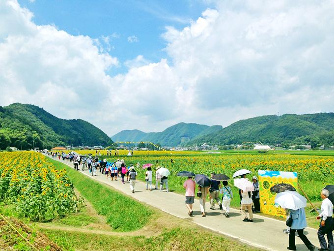 兵庫県・佐用町の「ひまわり畑」の風景。青空と白い雲の下、見渡す限り黄色い「ひまわりの花」が広がっている。その中の小道をたくさんの人が歩いている。
