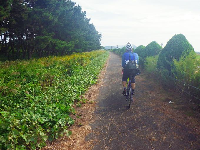 滋賀県近江八幡市内の湖岸道路の写真。真っ直ぐな道の両脇に、たくさんの木々や雑草などが生えていて、道路上には枯れ草が積もっている。