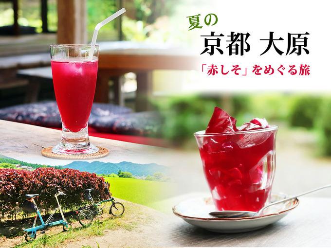 タイトルテキスト「夏の京都大原、赤しそをめぐる旅」と、赤しそジュース、赤しそゼリーの写真