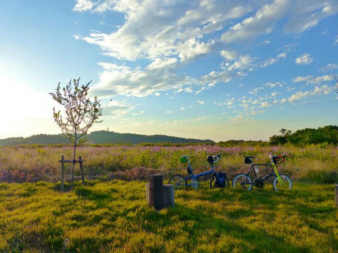 夕陽に染まる草むらに2台の自転車、バイクフライデーの折り畳みミニベロ「ニューワールドツーリスト」とミニベロロード「コメットR」が停められている。草むらにはコスモスの花が咲いている。