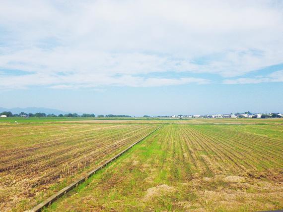 滋賀県東近江市の田園風景の写真。米の収穫を終えた後の緑色の草むらが広がっている。
