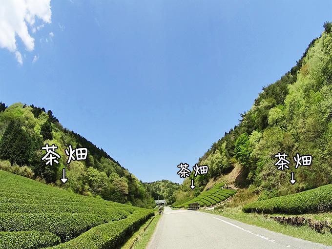三田の母子の風景の写真。道路の両側にいくつもの茶畑がある。