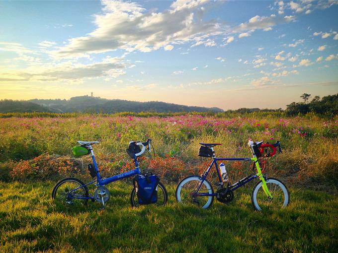 夕陽に染まる草むらに2台の自転車、バイクフライデーの折り畳みミニベロ「ニューワールドツーリスト」とミニベロロード「コメットR」が停められている写真。草むらにはコスモスの花が咲いている。