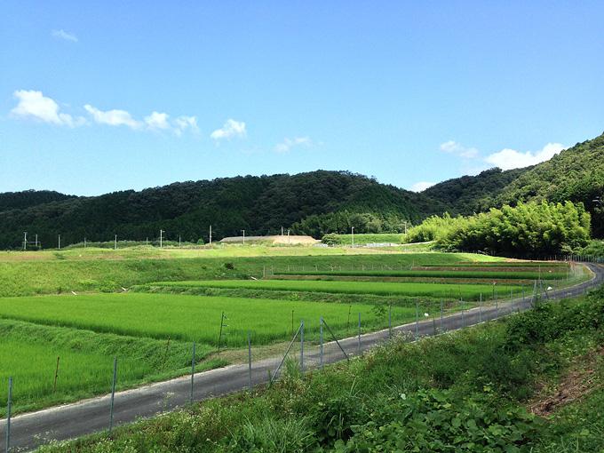 鮮やかな緑色の「棚田」の風景。目に映る風景のほとんどは草木や稲苗の緑色か、空の青だ。