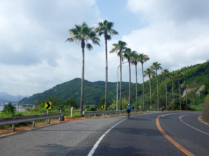 海辺のカーブ。道路脇には背の高い椰子の木が立ち並んでいる。その下を友人が乗った自転車が走っている。