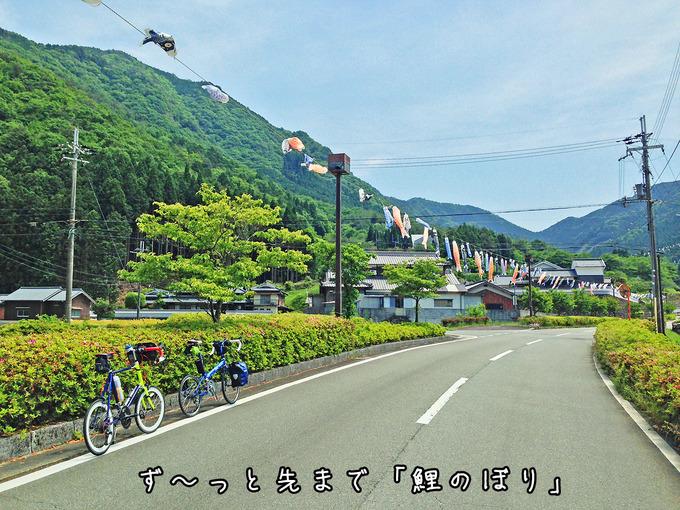 兵庫県神崎郡神河町にある「グリーンエコー笠形」に続く道路に沿って、たくさんの「鯉のぼり」が道しるべとして吊るされている風景。ずっと先まで鯉のぼりの列が続いている。