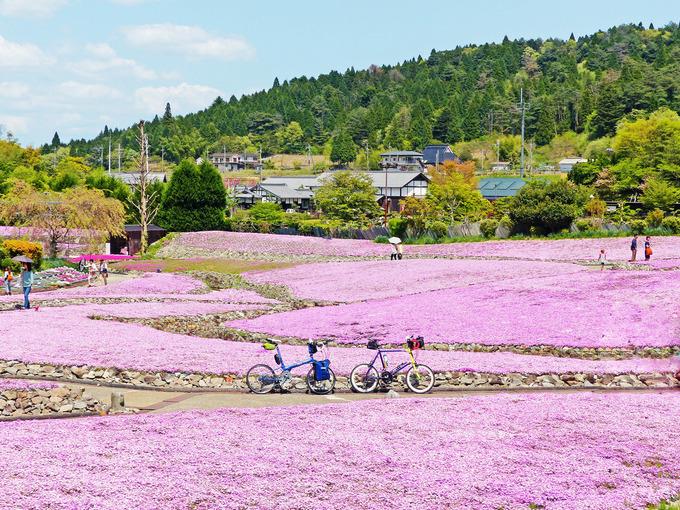 三田の観光花畑「花のじゅうたん」の風景。満開の芝桜に囲まれて2台の自転車、ニューワールドツーリストとコメットRが停められている。
