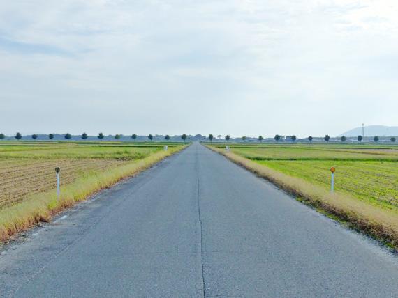 滋賀県高島市の広大な田園風景。収穫を終えた後の田んぼの真ん中に、まっすぐの道路が続いている。