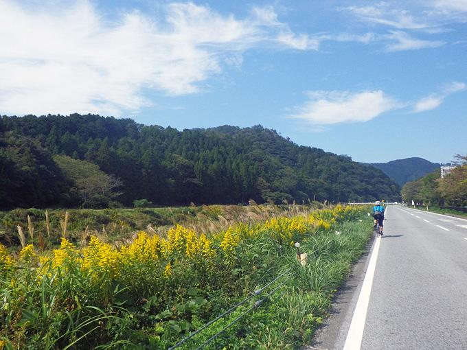 滋賀県長浜市の県道44号線の写真。左側にはセイタカアワダチソウの黄色い花がずっと先まで続いている。