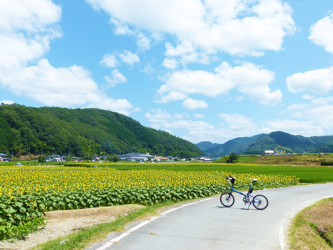 ひまわり畑より少し高い所に作られた小道に、バイクフライデーの折り畳みミニベロ「ニューワールドツーリスト」が停められている。ひまわり畑の黄色い色と、その上には青空が広がっている。