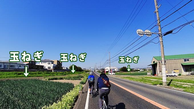 南あわじ市の農地を走る道路の写真。道路脇にはいくつもの玉ねぎ畑が見える。