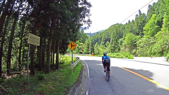 山道の急な上り坂の写真。辺りには背の高い杉の木が立ち並んでいる。