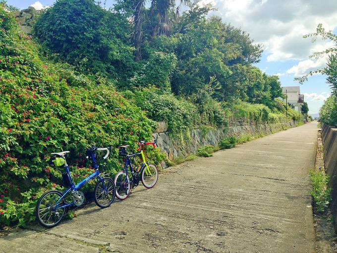 播磨サイクリングロードの道沿いに伸びた緑色の葉と、その中にピンク色の花がある風景。花と緑の前に、2台の自転車、バイクフライデーの折り畳みミニベロ「ニューワールドツーリスト」とフジのミニベロロード「コメットR」が停められている。道が真っ直ぐに伸びている。